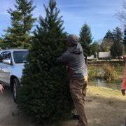 Santa Cruz County Christmas Tree Farms by Mckenzie Ranch Christmas Tree Farm 18 Photos U0026 17 Reviews