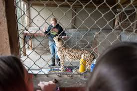 100 Cheetah Trucking S Kids Paint During Spring Break At The Wildlife Safari