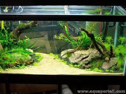 aquarium d eau douce l aquarium définition et explications