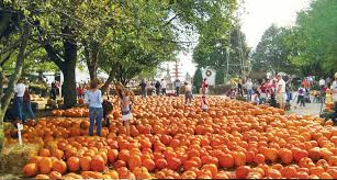 Best Illinois Pumpkin Patches by The Great Pumpkin Patch In Arthur Illinois