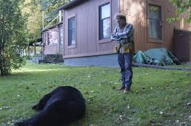 Wounded Bear Found Dead In Vernon Yard On 3rd Hunt Day - New ... Grumpy Senior Dog In The Backyard Stock Photo Akchamczuk To With Love January 2017 Friendly Ideas In Garden Pricelistbiz Portrait Of Female Boxer Dog Standing On Grass Backyard Lavish Toys For Dogs Toy Organization February Digging Create A Sandbox Just For His Digging I Like Quite Moments Fall Wisconsin Quaint Revival Yesterday Caught My Hole Today Unique Toys Architecturenice Cia Fires Since Sniffing Bombs Wasnt Her True Calling Time A View From Edge All Love Part Two
