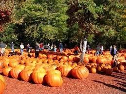 Old Mcdonalds Farm Pumpkin Patch Scottsdale 36 best pumpkin patches images on pinterest pumpkin patches