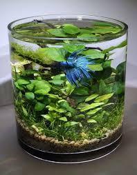 les 25 meilleures idées de la catégorie petit aquarium sur
