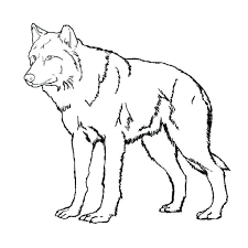 Coloring Pages Of Wolves Image Result For Free A Wolf Realistic Printable