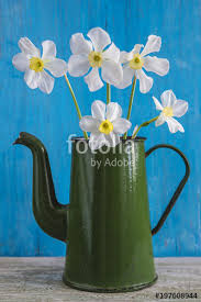 White Daffodils In Vintage Green Coffee Pot