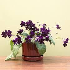 17 Best Flowering Houseplants