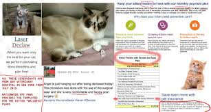 cost to declaw cat beth archives city the kitty official
