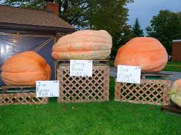 Pumpkin Festival Cleveland Ohio by 15 Fall Fests To Hit In Northeast Ohio This Season
