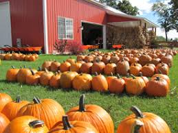 Pumpkin Farms Southern Illinois by Pumpkin Patches U0026 Farms Near Chicago Illinois