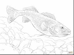 Marvelous Walleye Fish Coloring Page With Fishing Pages And For Adults