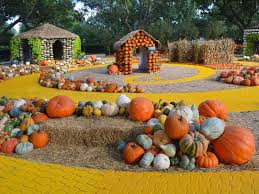 Medina Pumpkin Patch 2014 by 8 Top Pumpkin Patches In Texas Tripstodiscover Com