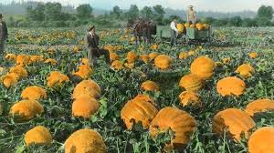 North Plains Pumpkin Patch by It U0027s Pumpkin Pickin U0027 Time List Of Local Pumpkin Patches U0026 Corn