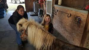 Pumpkin Patch Near Vancouver Wa by Pony Found Wandering Near Vancouver Mall Reunited With Owner