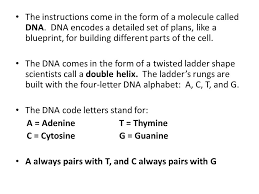 GENETICS AND HEREDITY ppt video online