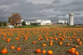 Best Pumpkin Patches In Cincinnati by 100 Pumpkin Patch Hayrides Cincinnati Ohio Columbus And