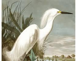Vintage Audubon Snowy Heron Bird Print Giclee Art Poster Beach