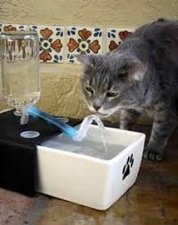 water for cats diy cat water 15 click on the flickr link for