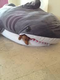 Pottery Barn Dog Bed by Fresh Pottery Barn Shark Bean Bag 10812