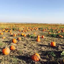 Pumpkin Farms In Channahon Illinois by Kellers Farmstand 22 Photos U0026 21 Reviews Pick Your Own Farms