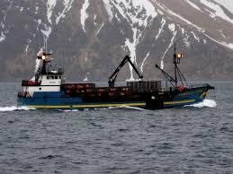 Deadliest Catch Boat Sinks Destination by Fv Cornelia Marie Wikipedia