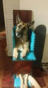 Bailey Chair Megaesophagus Instructions by Megaesophagus Feeder By Trendypet Com Trendypet Tags Dog Pet