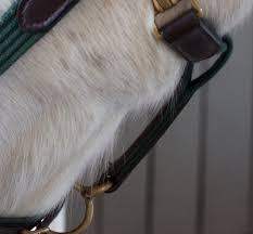 Dog Horse Shedding Blade by Pro Equine Grooms Shedding Out
