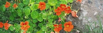 Education Florida Master Gardener Program University of