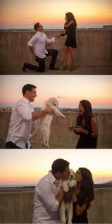 30 Best Engagement Images On Pinterest Engagement by Best 25 Marriage Proposals Ideas On Pinterest Proposal Ideas