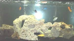large aquarium rocks for sale pictures of aquariums with ornaments including rocks and plastic