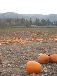 Pumpkin Patch Sauvie Island Corn Maze by The Pumpkin Patch Sauvie Island The Most Beautiful Island In The