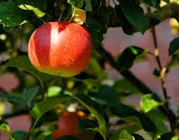 Pumpkin Picking Long Island Ny by Apple Picking On Long Island 2016 Where To Pick Your Apples