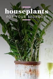 dies sind die 15 besten zimmerpflanzen für ihr schlafzimmer