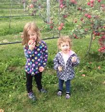 Best Pumpkin Patches Near Milwaukee by Milwaukee Pumpkin Patches And Apple Orchards