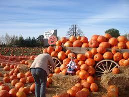 Heather Farms Pumpkin Patch by The Skogen Family Roloff Farms The Pumpkin Patch