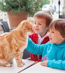 arlington cat clinic veterinarians in arlington ma vca city cats hospital