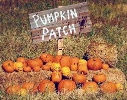 Schaake Pumpkin Patch by Image Gallery Pumpkinpatch