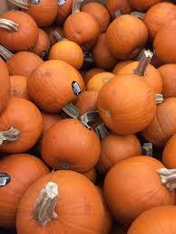 Pumpkin Patch Sf Yelp by Forget The Pumpkin Patch Cvs Has The Best Pumpkins Yelp