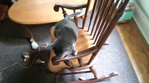 Cat Request Help With Rocking Chair