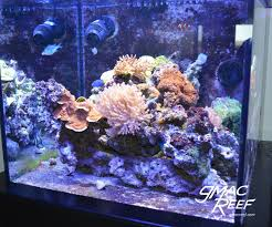 Creating Flow In The Reef Tank | Gmacreef Home Design Aquascaping Aquarium Designs Aquascape Simple And Effective Guide On Reef Aquascaping News Reef Builders Pin By Dwells Saltwater Tank Pinterest Aquariums Quick Update New Aquascape Of The 120 Youtube Large Custom Living Coral Nyc Live Rock Set Up Idea Fish For How To A Aquarium New 30g Cube General Discussion Nanoreefcom Rockscape Drill Cement Your Gmacreef Minimalist 2reef Forum