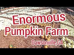 Burts Pumpkin Farm 2015 by Burts Pumpkin Farm Dawsonville Ga Youtube