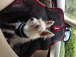 Car Seat. Best Car Seat Covers For Dogs: Best Truck Seat Covers ... The 1 Source For Customfit Seat Covers Covercraft 2 Pcs Universal Car Cushion For Cartrucksuvor Van Coverking Genuine Crgrade Neoprene Best Dog Cover 2019 Ramp Suv American Flag Inspiring Amazon Smittybilt Gear Black Chevy Logo Fresh Bowtie Image Ford Truck Chartt Seat Covers Chevy 1500 Best Heavy Duty Elegant 20pc Faux Leather Blue Gray Full Set Auto Wsteering Whebelt Detroit Red Wings Ice Hockey Crack Top 2017 Wrx With Airbags Used Deluxe Quilted And Padded With Nonslip Back