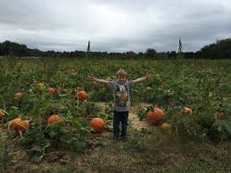 Pumpkin Picking Places In South Jersey by Amazing Places To Go Pumpkin Picking In New Jersey Mommy University