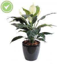 plantes vertes d interieur plante verte d interieur spitpod