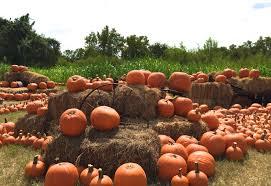Colorado Pumpkin Patch by Barton Hill Farms 2015 Fall Festival U0026 Corn Maze U2013 Review U2013 Do512