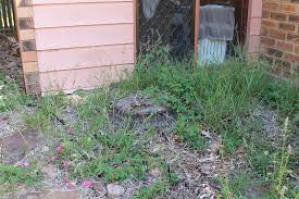 Snake Prevention In The Australian Back Yard - SnakeOut Florida Brown Snake Backyard Snakes Is This A Copperhead Backyard Chickens Hornets Eating In My Rebrncom In Youtube Catcher Removes Mating Brown Snakes From Queensland Backyard Of Pennsylvania 21 Species 3 Them Venomous Pennlivecom The Lollipop Tree A Well Monster Lives My Slithering Nj Meet The 22 Snake Garden State Images Identify North Carolina Wsoctv Cooldesign Architecturenice Big Page 6 Talk Villages