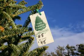 Fraser Fir Christmas Trees North Carolina by The Simple Life Blog Twin Pines Nursery A Christmas Tradition