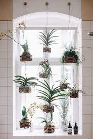 Best Plant For Dark Bathroom by Top 25 Best Window Plants Ideas On Pinterest Apartment Plants