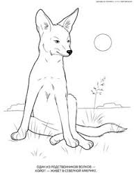 Wild Animals Coloring Pages Kids Printables