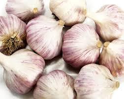 12 best garlic images on garlic gardening and