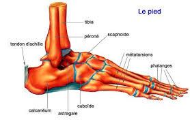 douleur interieur genou course a pied la douleur de pied du coureur run road trail ultra